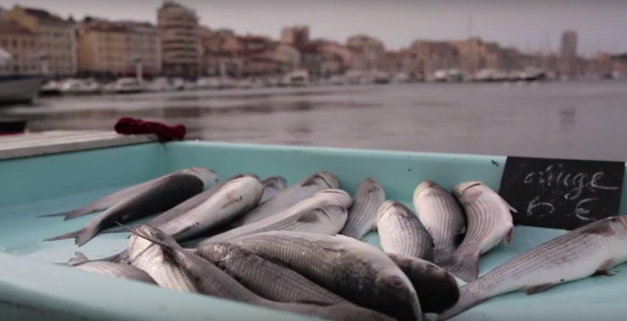 I pescatori di fronte alle sfide della biodiversità