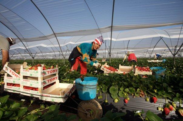 Migrants de l'agriculture, les oubliés de la précarité