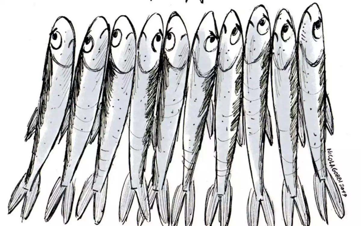 Les sardines se mettent en mouvement !