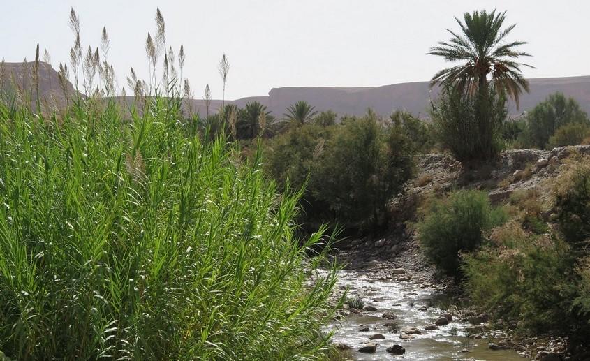 De Tétouan à Errachidia, visages d'un Maroc qui protège son environnement