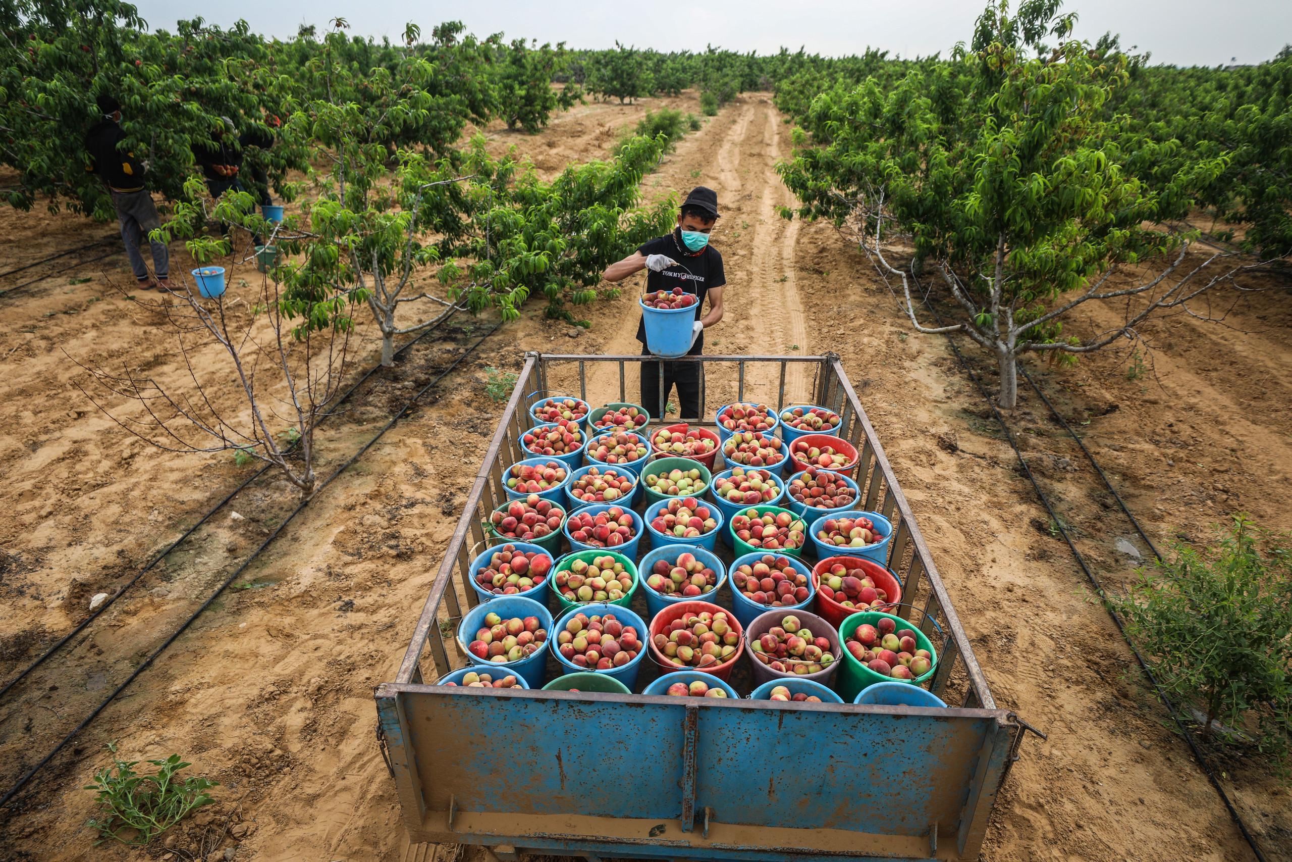 Covid-19 : A Gaza, les travailleurs palestiniens plongés dans la pauvreté