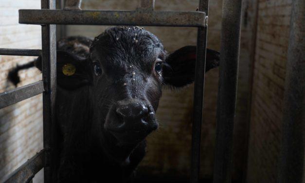 Agro-alimentaire : L'industrie laitière peut-elle changer ?