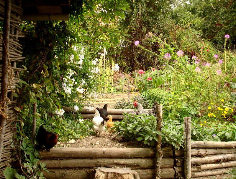La permaculture, une révolution au compte-goutte ?