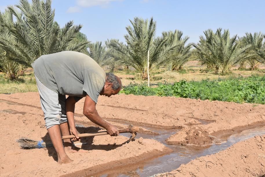L'agriculture à l'épreuve des changements climatiques